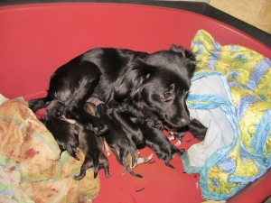 Snoepie met haar nestje, onmiddelijk na de geboorte